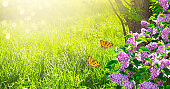 Mysterious spring background with lilacs flowers blossom and butterflies