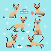 Vector illustration set of cute cat in different poses. Eating, sleeping, sitting and playing kitten in flat cartoon style.