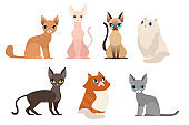 Vector illustration set of different cat breeds, cute pet animal collection, different cats on white background in cartoon flat style.