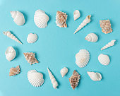 Creative seashell pattern on pastel blue background with copy space. Summer minimal concept.
