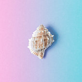 Creative composition with seashell on gradient pastel pink and blue background. Summer minimal concept.