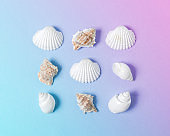 Creative composition with seashells on gradient pastel pink and blue background. Summer minimal concept.