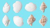 Seashell pattern on blue background. Summer minimal concept.