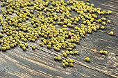 Green grains mung