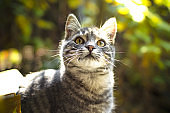 Portrait of a tabby kitten in the background of yellow foliage