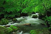 Aomori Prefecture summer mountain stream