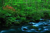 fresh green Oirase mountain stream