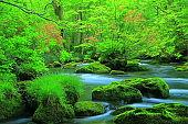 Aomori fresh green Oirase mountain stream