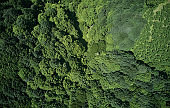 Aerial top view of spring in forest in rural