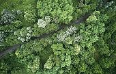 Aerial photos of rainy forest