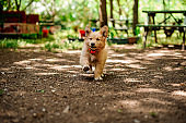 Happy puppy runs in yard with flowers