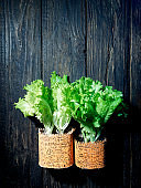 Lettuce over wooden background