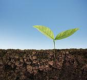 green plant tree growing