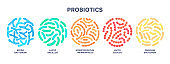 Probiotics. Lactic acid bacterium. Bifidobacterium, lactobacillus, streptococcus thermophilus, lactococcus