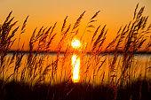 Morning landscape on the lake