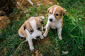 Two homeless little puppies with sad eyes on green grass.