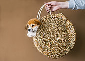 Cute dog puppy in a straw basket poses for the camera.
