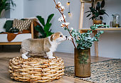Cute puppy smelling green plant indoors