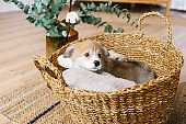 Cute puppy sitting in basket.