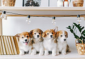 Cute puppies on a wooden shelf