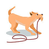 Cute Playful Brown Puppy Want Play Drag Rope Leash