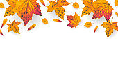 Golden autumn leaves border with empty space for banner, poster, sale flyer. Fall maple orange and yellow leaf element on white background. Thanksgiving frame design. Vector illustration