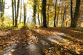 Park landscape in autumn: Colorful leaves and positive atmosphere