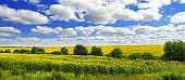 Panoramic view on sunflower field and village with cloudly sky