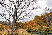 Autumn foliage scenery view, beautiful landscapes