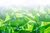 Pattern of green leaves background and flare light with copy space,Nature background,Abstract background