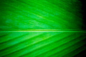 Fresh green leaves background, Texture and pattern leaf background, Nature background, Close up of plant