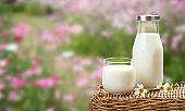 A bottle of rustic milk and glass of milk on wicker on flower garden background, tasty, nutritious and healthy dairy