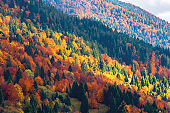bright autumn scenery in mountains