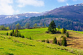 carpathian countryside in springtime
