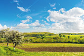 rural fields in spring. beautiful countryside