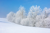 forest in hoarfrost on snow covered hill