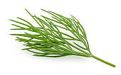 Fresh green dill isolated on white