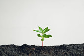 Trees and tree planting White background