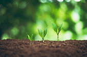 Tree plant and Growth In nature And beautiful bokeh
