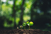 Growth Trees concept Coffee bean seedlings nature background Beautiful green