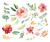 Big Set of watercolor elements. Illustration of garden and wild flowers, branches and leaves isolated on white background.