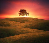 lonely tree on rolling hills with dreamy light