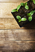 Green seedling in pots on wooden background. Ecology theme
