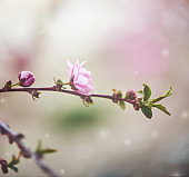 Nature background with tiny pink blossoms