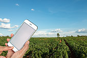 """Agriculture technology concept, """"nSmart farming using phone Internet of things report."""