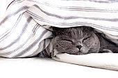 Cat sleeping under duvet