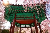 Pavilion in Seoul National Cemetery park and cherry blossom flower
