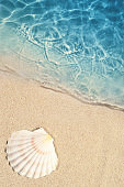 Seashell on the summer beach in sea water. Summer background.