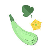 Set of paper cut zucchini. Origami squash whole,. Collection of vegetable marrow leaf and flower. Vector card illustration. Harvest courgette organic ingredient in paper art style.