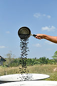 Asian senior woman roasting coffee beans in a traditional way.